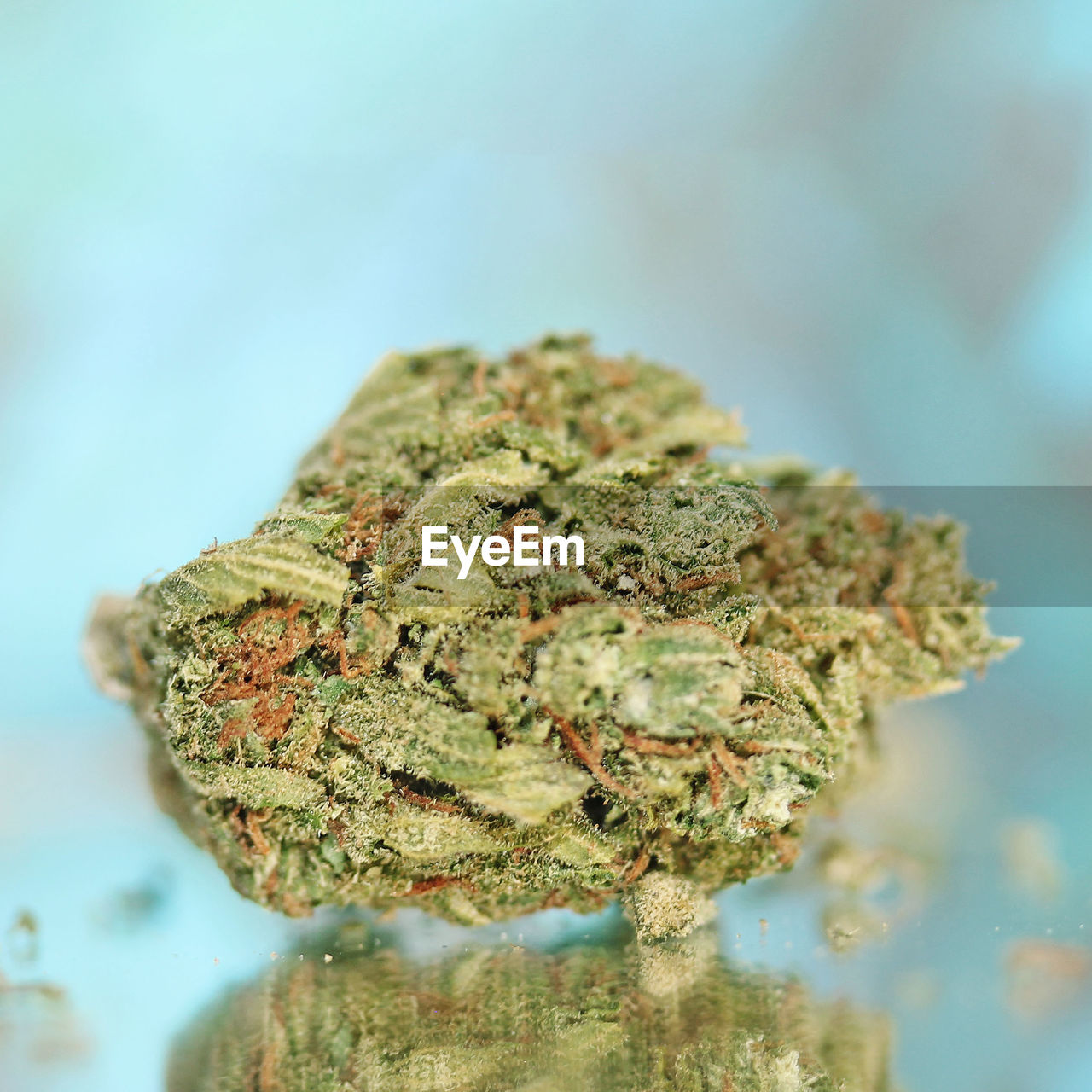 marijuana - herbal cannabis, cannabis plant, healthcare and medicine, close-up, plant, narcotic, selective focus, medicine, cannabis - narcotic, herbal medicine, no people, alternative medicine, medical cannabis, indoors, social issues, nature, focus on foreground, beauty in nature, herb