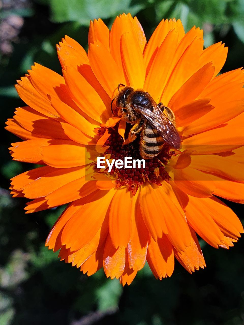 flowering plant, flower, petal, animal themes, invertebrate, beauty in nature, animal wildlife, animals in the wild, fragility, flower head, one animal, insect, animal, vulnerability, plant, growth, close-up, freshness, orange color, inflorescence, pollen, pollination, no people, outdoors