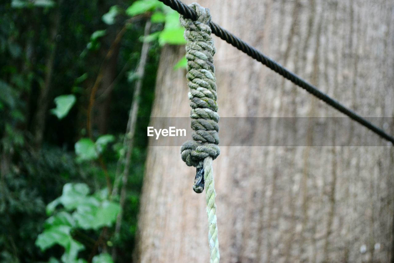 day, rope, focus on foreground, no people, strength, nature, metal, plant, close-up, outdoors, green color, selective focus, wood - material, growth, hanging, safety, tree, connection, wall - building feature, chain