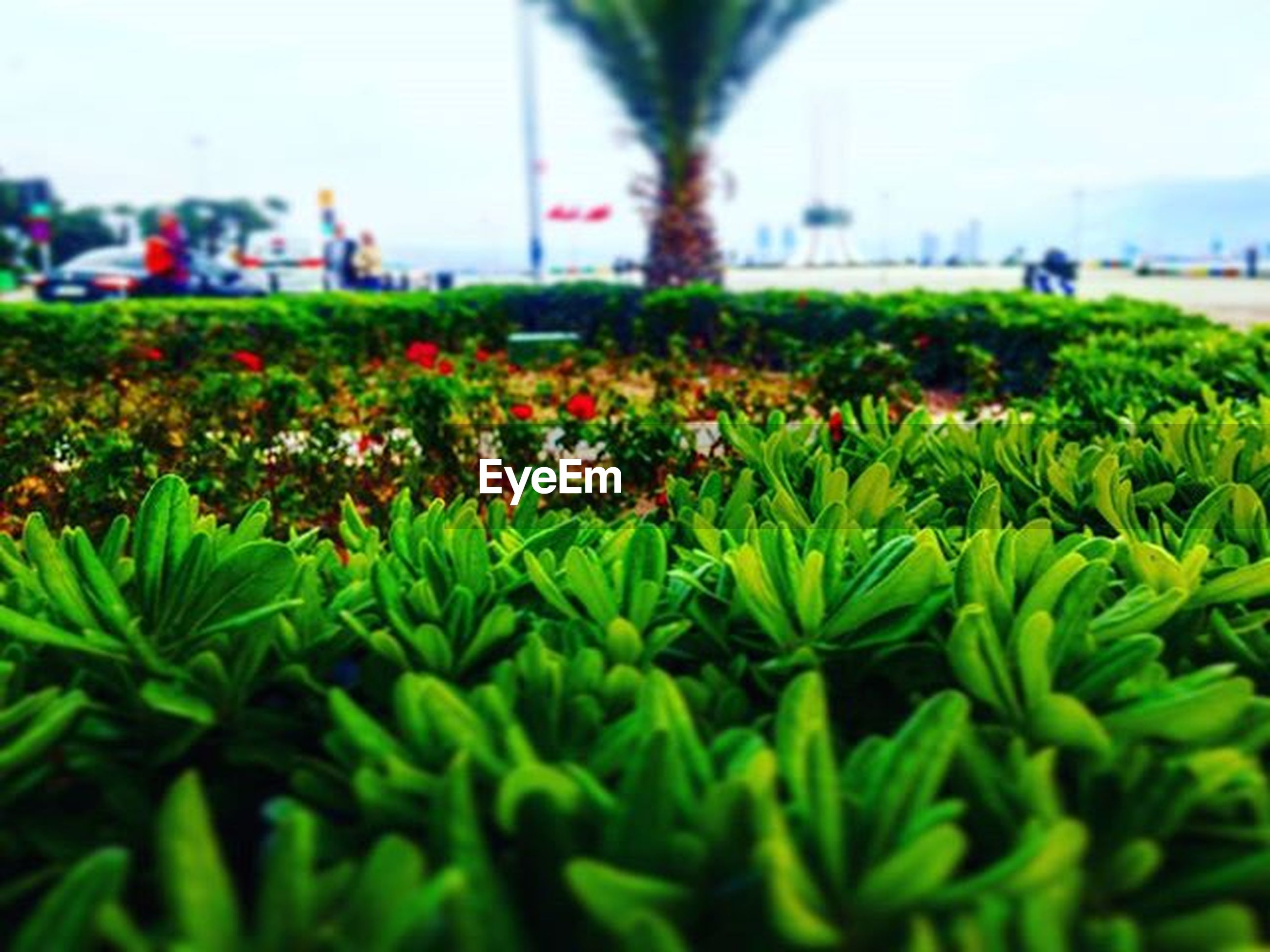 flower, growth, freshness, plant, fragility, beauty in nature, green color, nature, focus on foreground, leaf, selective focus, day, growing, field, outdoors, blooming, close-up, incidental people, park - man made space, in bloom