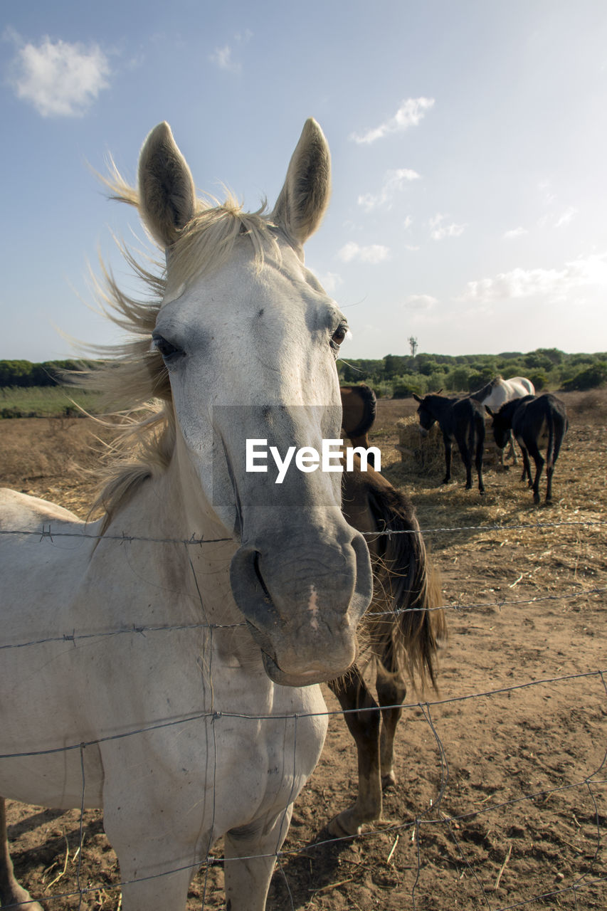 animal, domestic animals, livestock, domestic, animal themes, mammal, pets, group of animals, vertebrate, animal wildlife, field, horse, land, sky, portrait, nature, day, herbivorous, two animals, looking at camera, no people, outdoors, animal head, ranch
