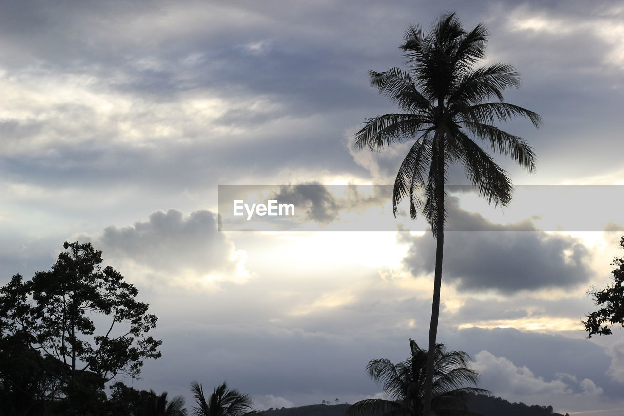 sky, cloud - sky, tree, tropical climate, palm tree, plant, beauty in nature, scenics - nature, tranquil scene, growth, nature, tranquility, low angle view, no people, sunset, trunk, tree trunk, silhouette, coconut palm tree, outdoors, tropical tree, palm leaf