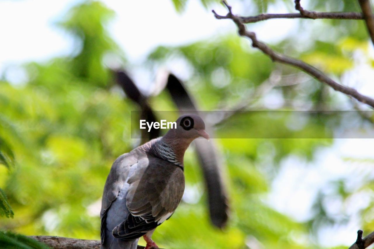 bird, animal themes, vertebrate, animal, animal wildlife, animals in the wild, one animal, tree, plant, day, focus on foreground, no people, branch, perching, close-up, nature, outdoors, low angle view, green color
