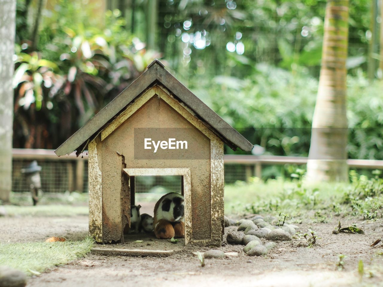 animal themes, animal, mammal, vertebrate, tree, built structure, plant, day, architecture, nature, one animal, domestic, domestic animals, animal wildlife, no people, pets, focus on foreground, animals in the wild, outdoors