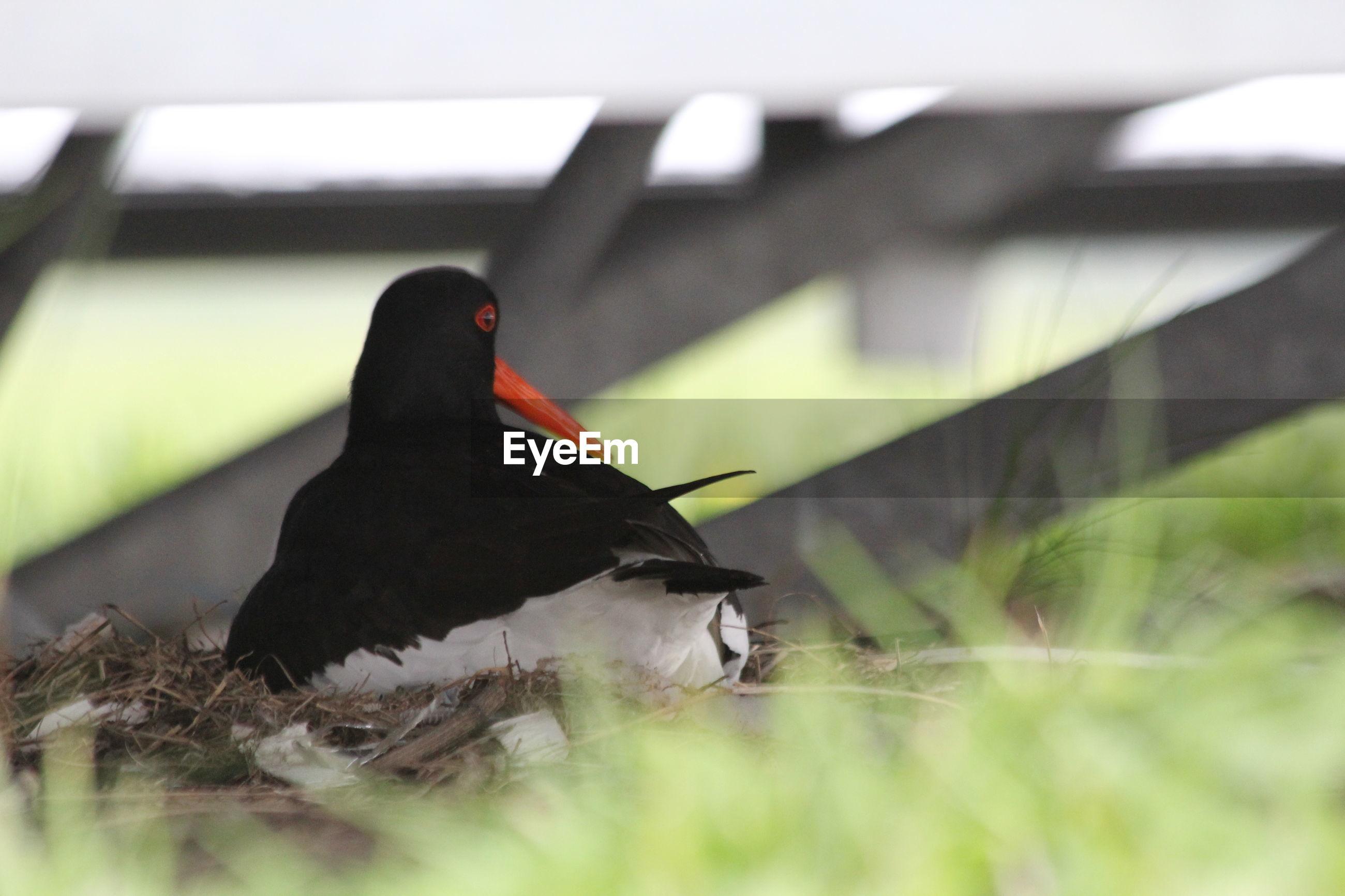 Close-up of bird relaxing