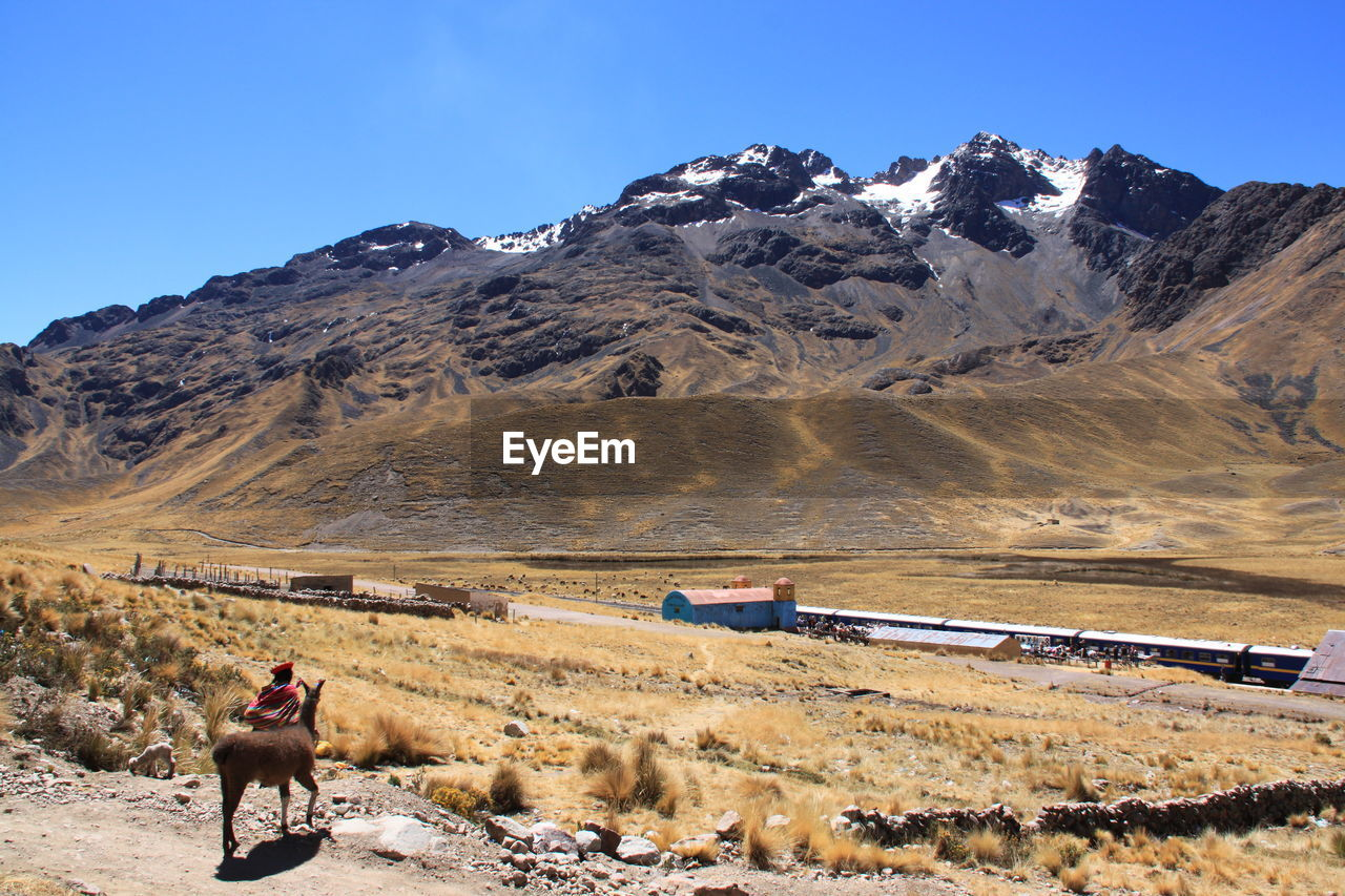 Rear view of person standing by llama in front of mountains