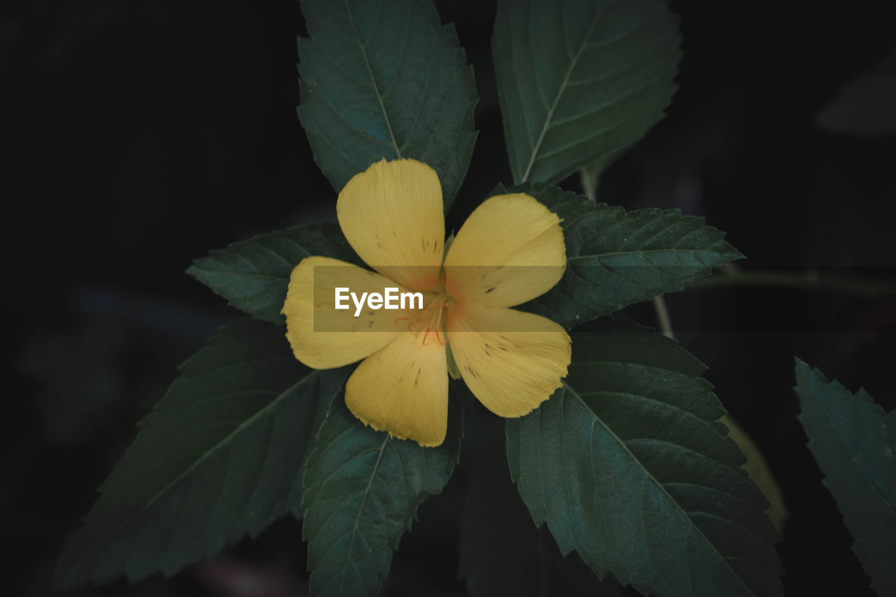 flower, flowering plant, plant, petal, fragility, flower head, inflorescence, vulnerability, close-up, freshness, yellow, growth, beauty in nature, plant part, leaf, nature, no people, focus on foreground, outdoors