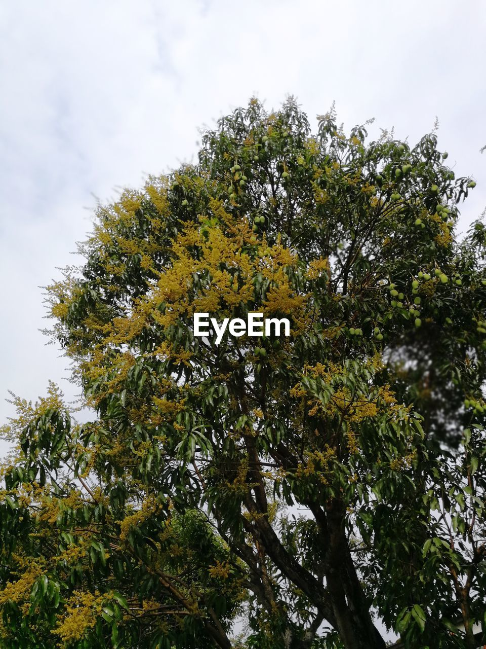 tree, growth, nature, sky, low angle view, day, no people, green color, beauty in nature, outdoors, leaf, branch