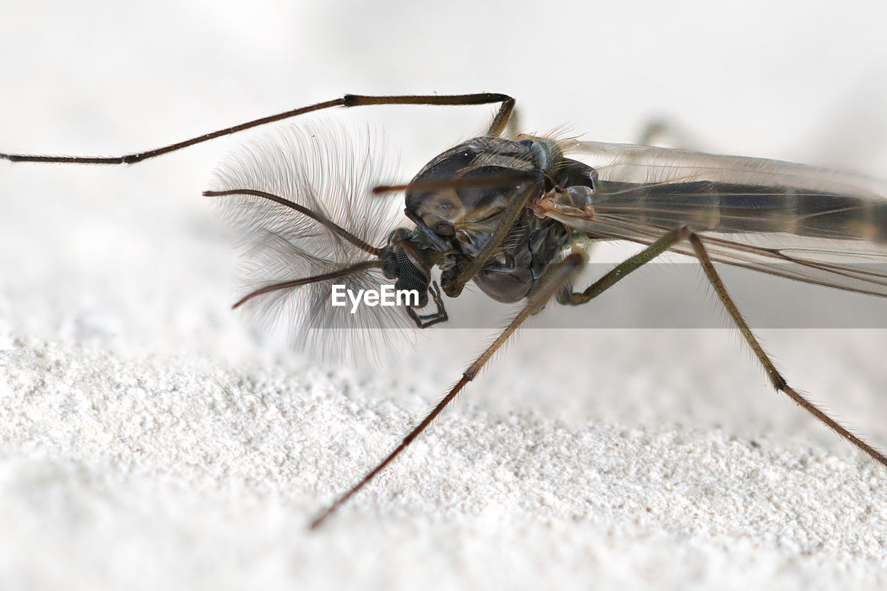 invertebrate, insect, animal wildlife, animals in the wild, one animal, close-up, selective focus, day, nature, no people, animal wing, animal body part, focus on foreground, outdoors, zoology, macro, animal antenna, animal eye