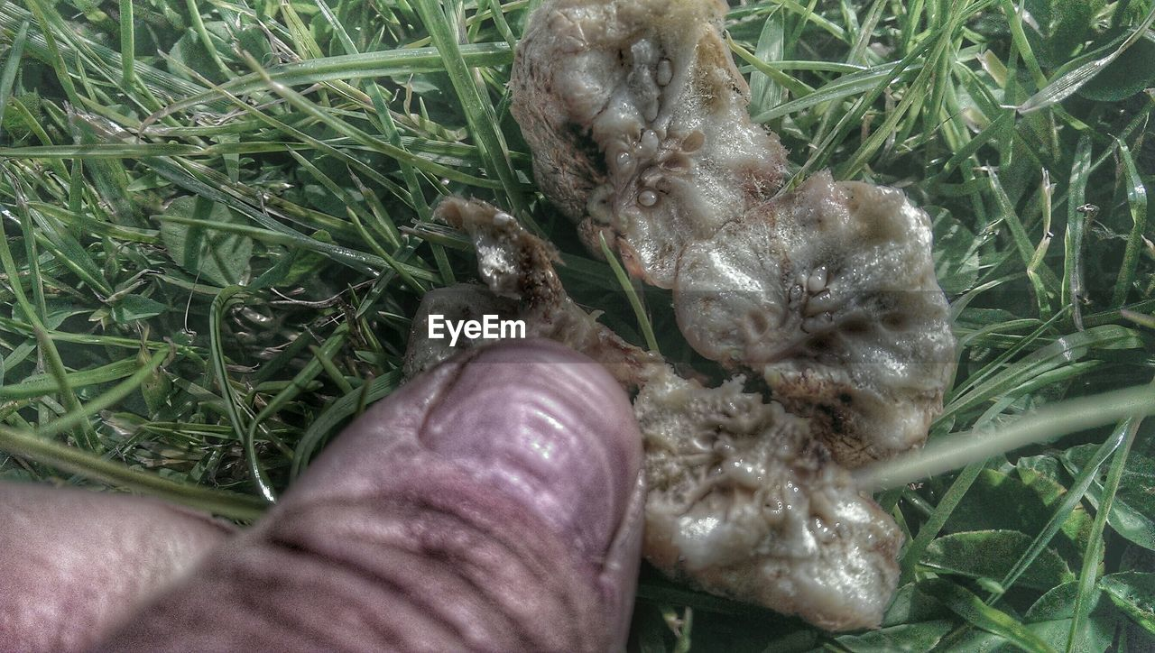 human body part, human hand, grass, high angle view, real people, one person, day, outdoors, animal themes, close-up, nature, people