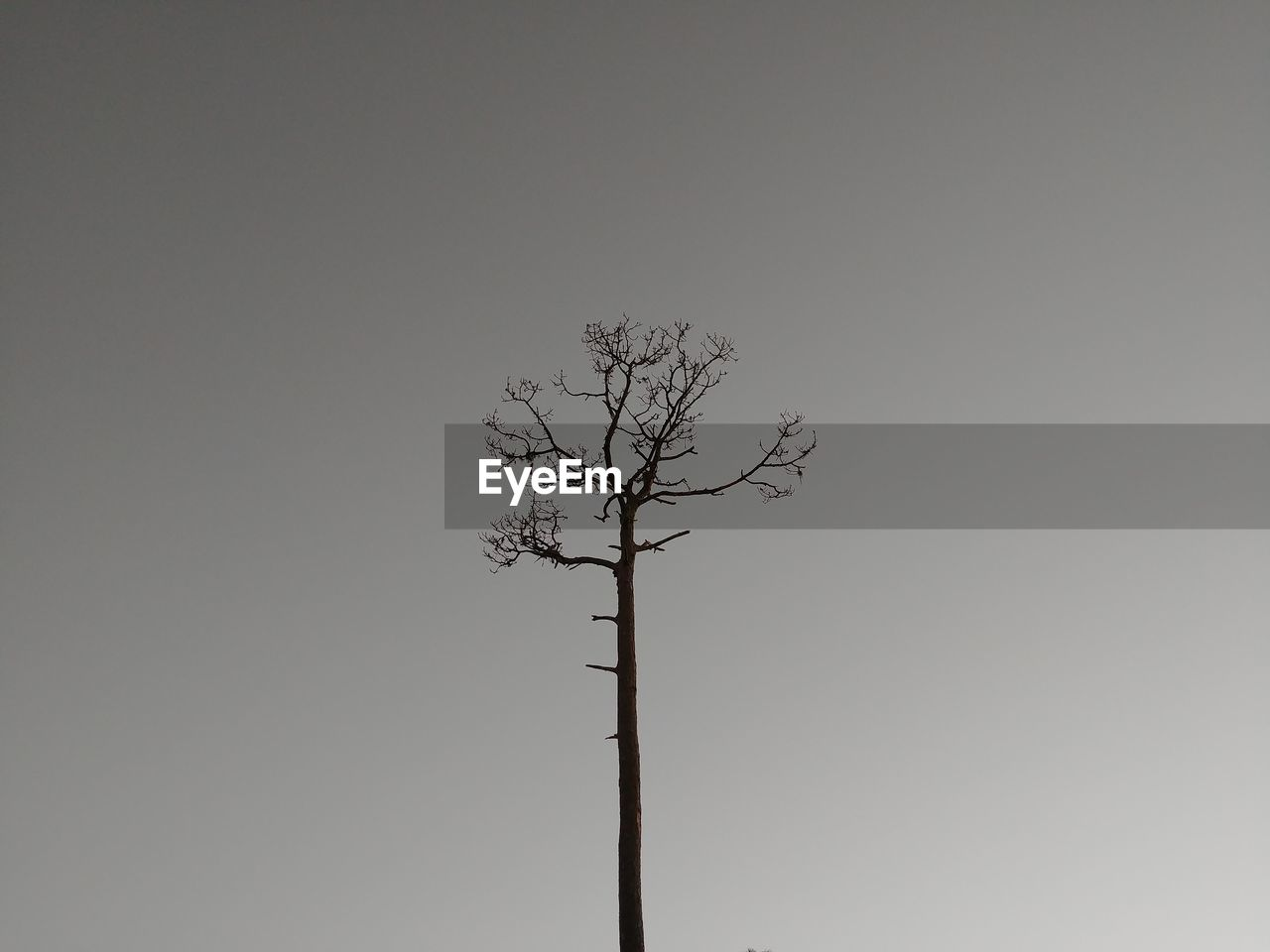 bare tree, branch, lone, isolated, clear sky, tree, tranquility, tree trunk, beauty in nature, nature, outdoors, day, no people, sky