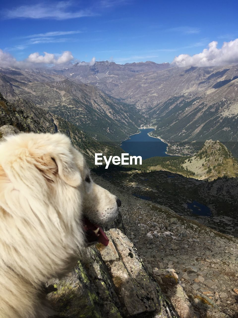 one animal, mountain, pets, animal themes, mammal, domestic, domestic animals, animal, canine, dog, vertebrate, mountain range, sky, nature, day, beauty in nature, no people, scenics - nature, rock, cloud - sky, outdoors, animal head