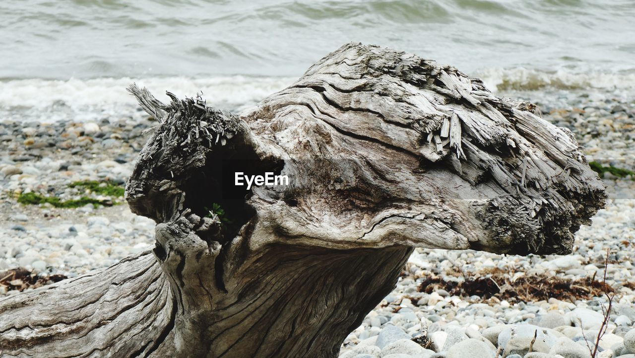 animal wildlife, animals in the wild, animal, solid, animal themes, close-up, no people, one animal, focus on foreground, day, rock, sea, beach, nature, land, water, rock - object, animal body part, outdoors, animal head, marine, pebble