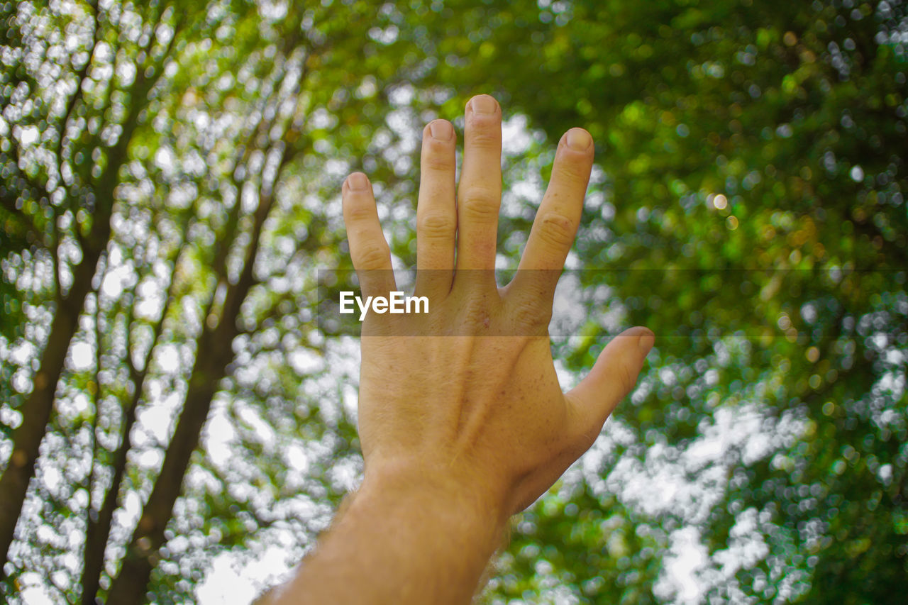 human hand, hand, human body part, tree, human finger, finger, plant, body part, focus on foreground, unrecognizable person, one person, gesturing, day, real people, low angle view, nature, personal perspective, showing, outdoors, growth, human limb