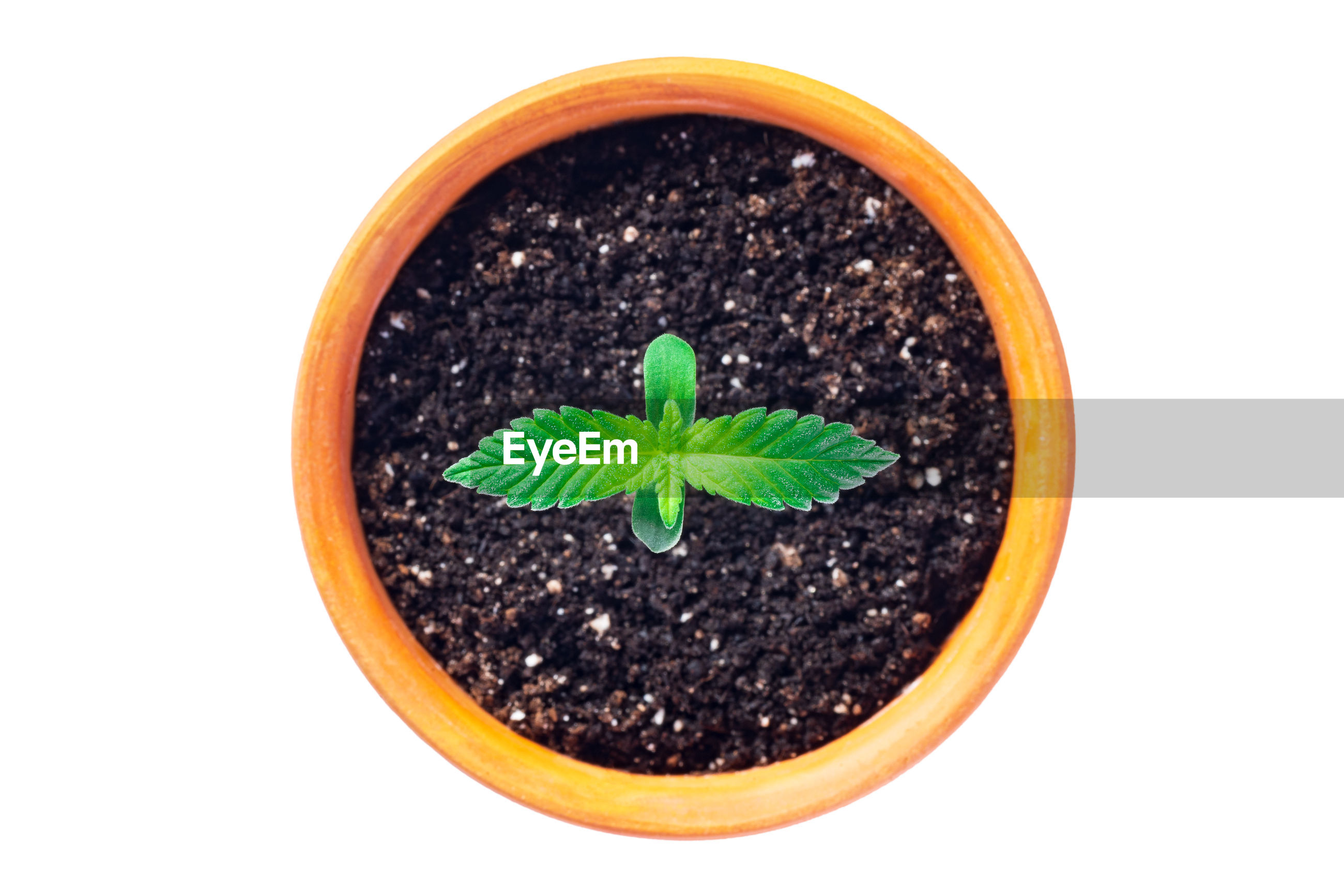 HIGH ANGLE VIEW OF GREEN POTTED PLANT ON WHITE BACKGROUND