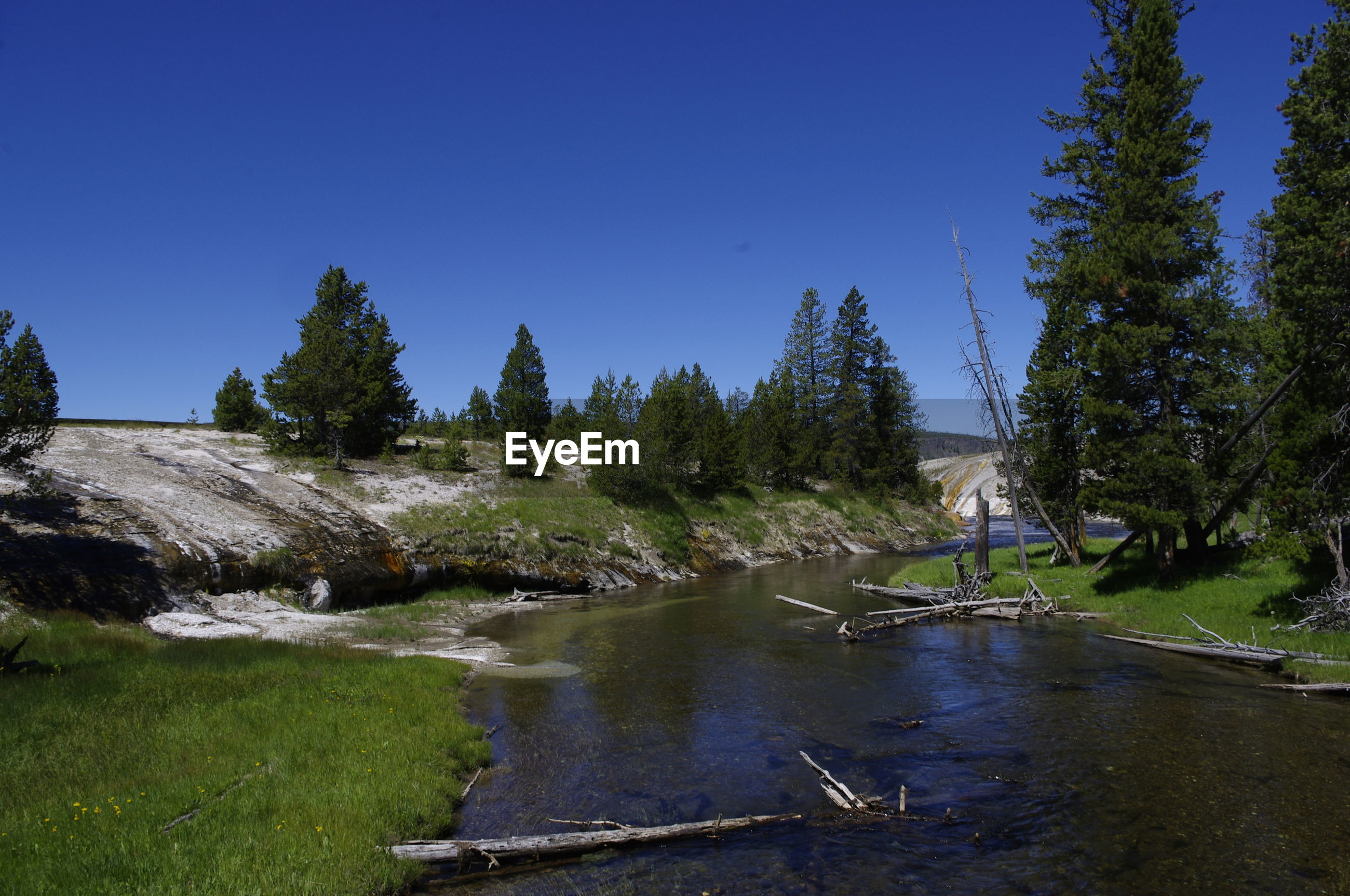 SCENIC VIEW OF RIVER AMIDST TREES IN FOREST AGAINST CLEAR BLUE SKY
