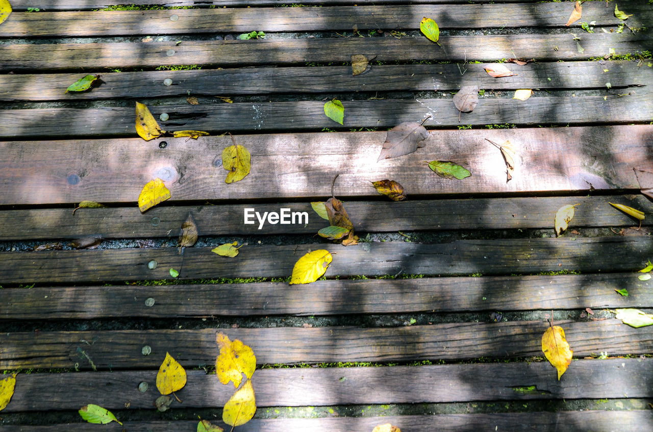 yellow, wood - material, day, outdoors, leaf, no people, close-up, teamwork, multi colored