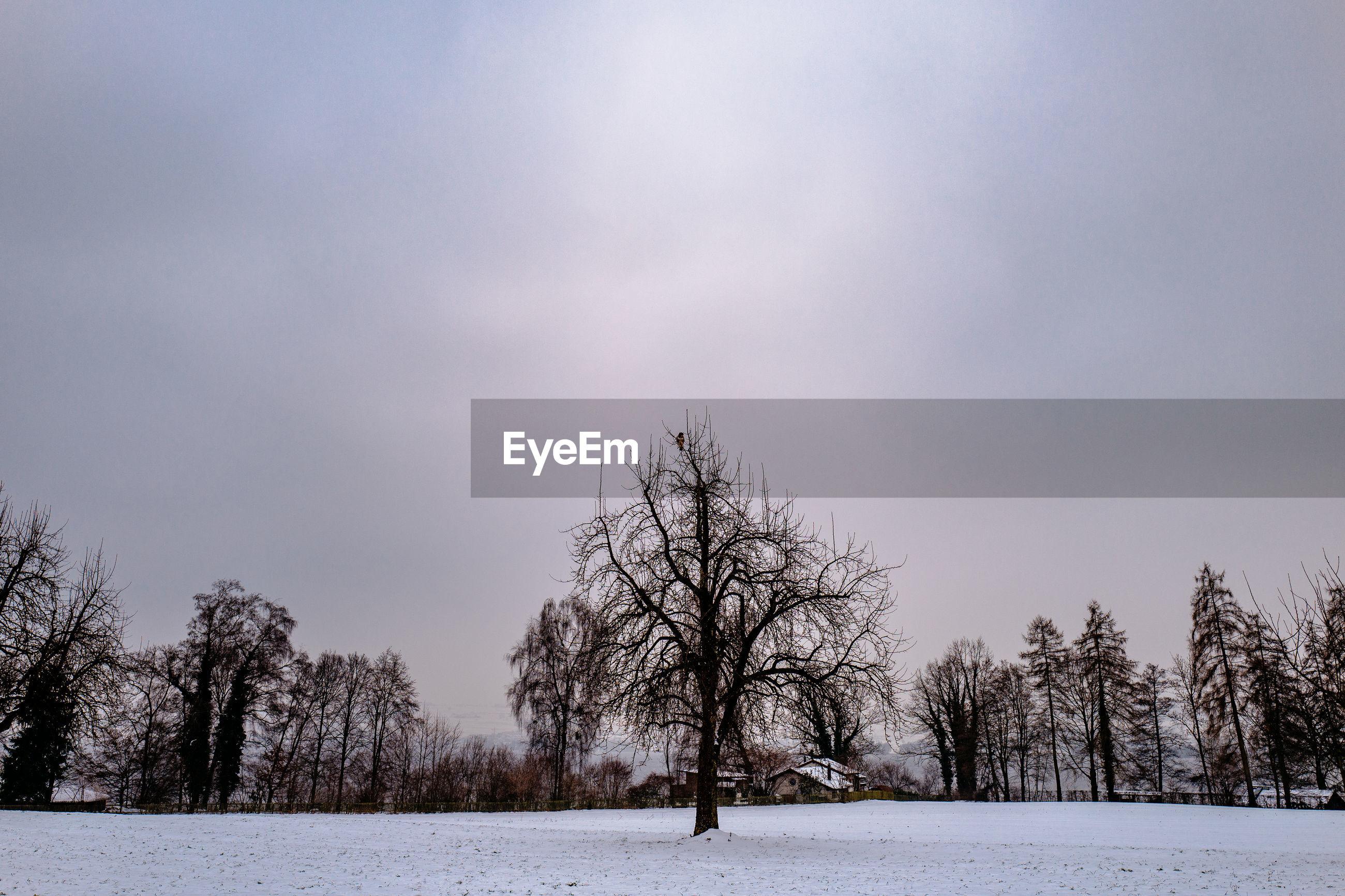 TREES ON SNOW FIELD AGAINST SKY