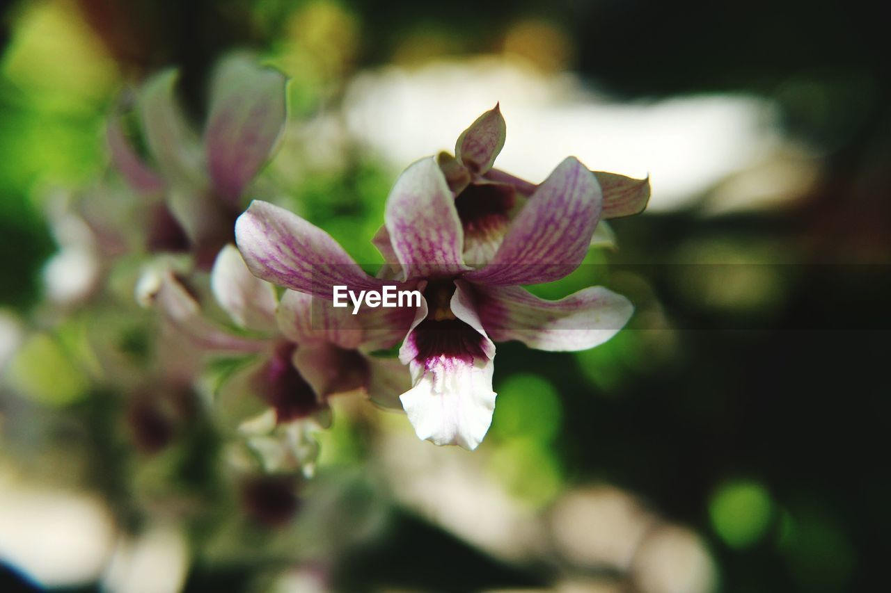 flower, nature, petal, fragility, beauty in nature, growth, freshness, selective focus, flower head, close-up, no people, plant, springtime, outdoors, day, blooming
