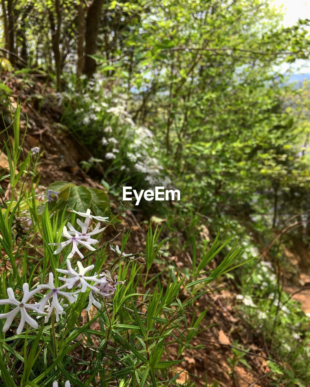 plant, growth, beauty in nature, green color, nature, land, tree, day, tranquility, no people, selective focus, forest, close-up, focus on foreground, freshness, outdoors, field, tree trunk, flower, trunk
