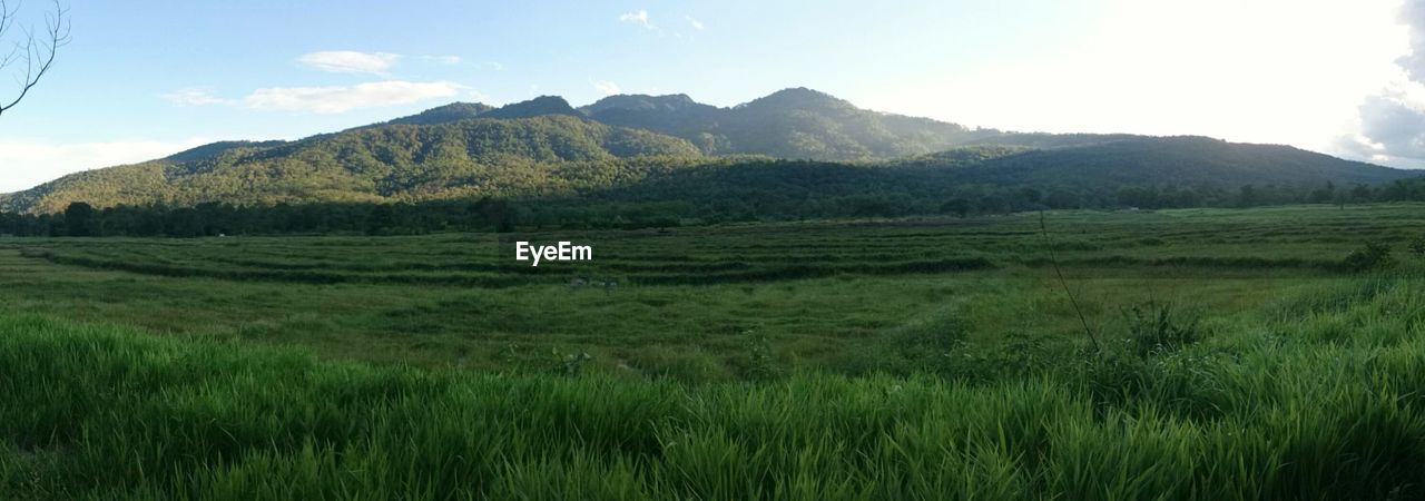 landscape, mountain, field, nature, beauty in nature, tranquil scene, grass, scenics, tranquility, agriculture, growth, sky, no people, day, outdoors, green color, rural scene, mountain range, rice paddy, tree