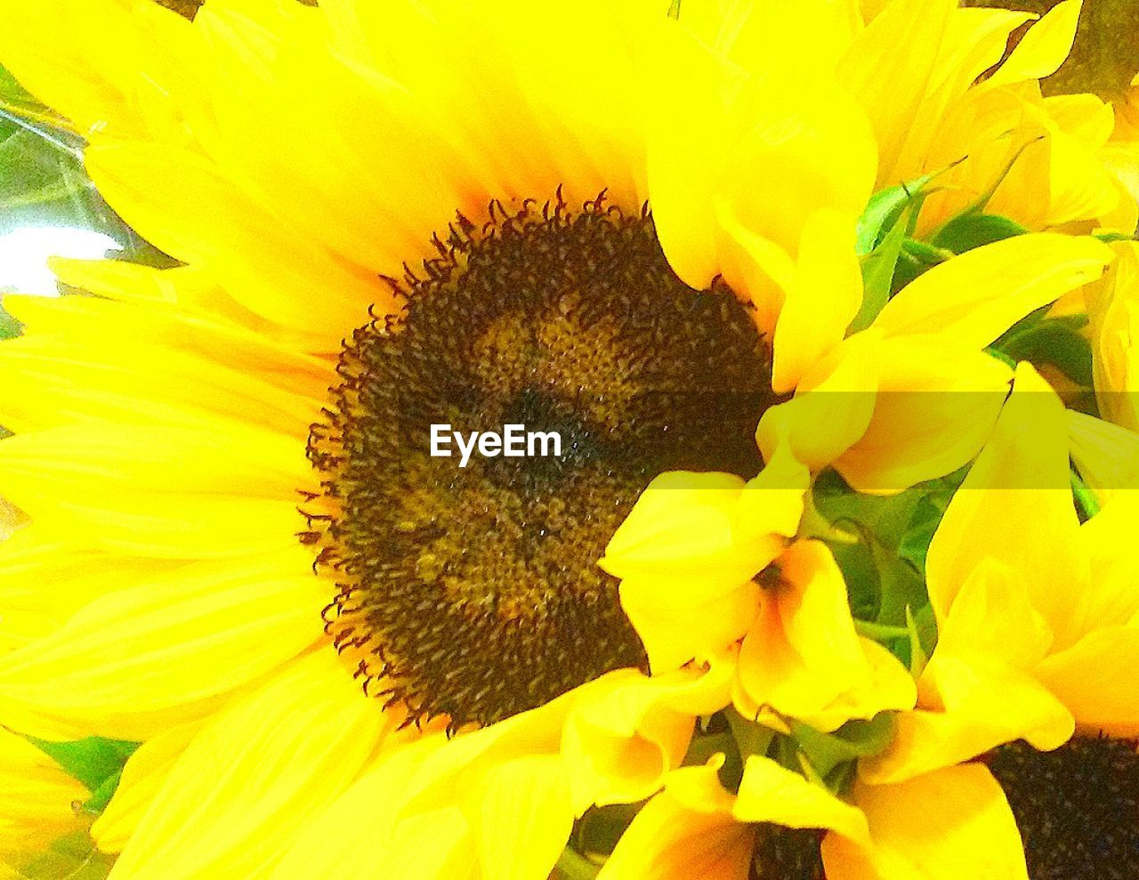flower, yellow, petal, fragility, freshness, beauty in nature, flower head, nature, growth, pollen, sunflower, close-up, no people, plant, outdoors, stamen, day, blooming, full frame, springtime, backgrounds, animal themes