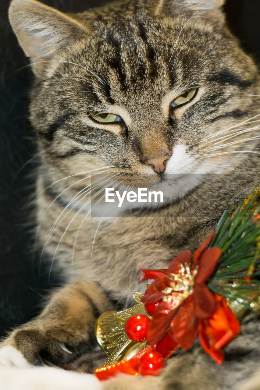 cat, domestic cat, feline, mammal, domestic, animal, animal themes, domestic animals, pets, vertebrate, one animal, close-up, no people, whisker, focus on foreground, plant, indoors, nature, day, selective focus, tabby