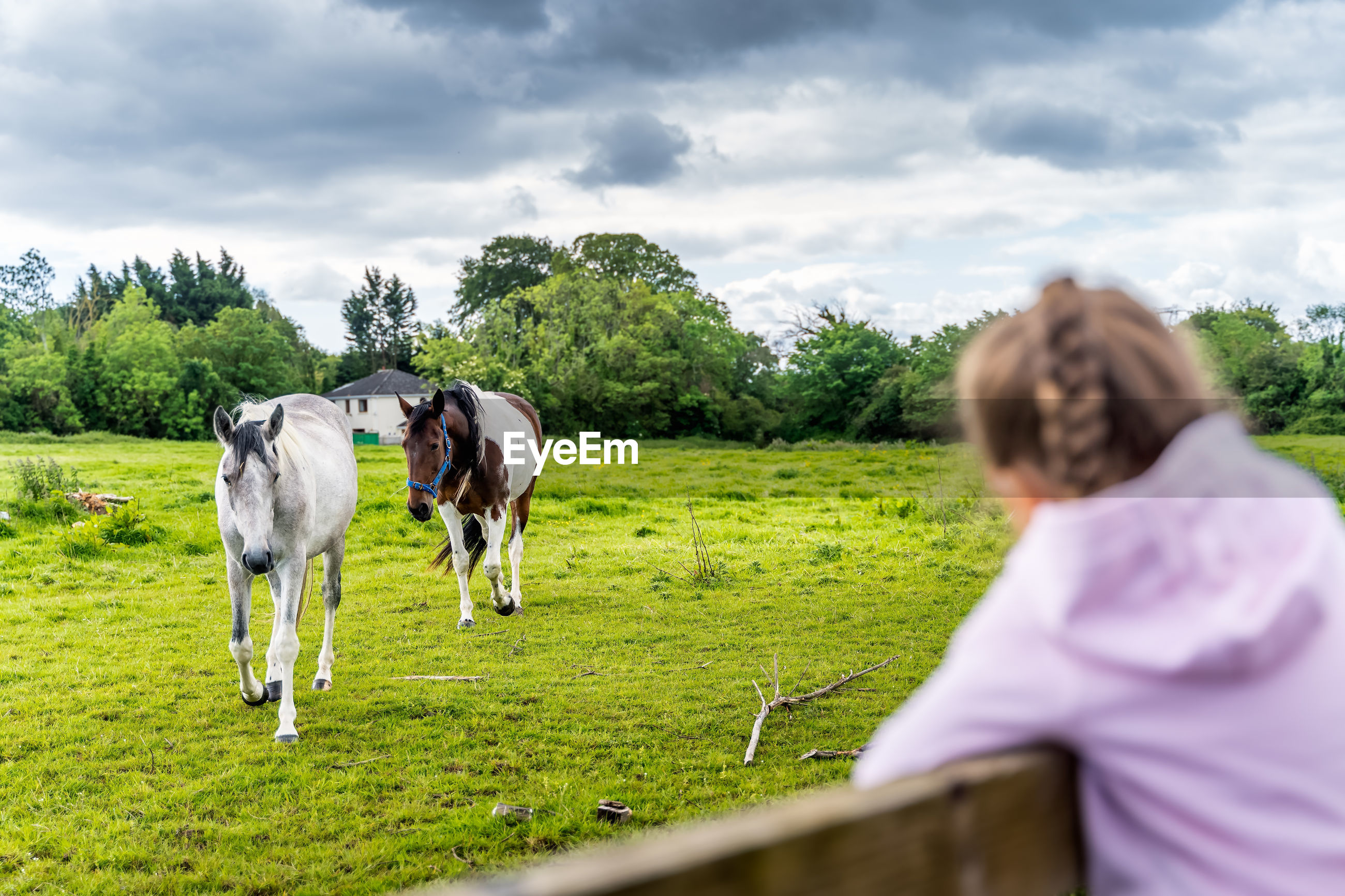 Cute girl looking at horse at field against sky