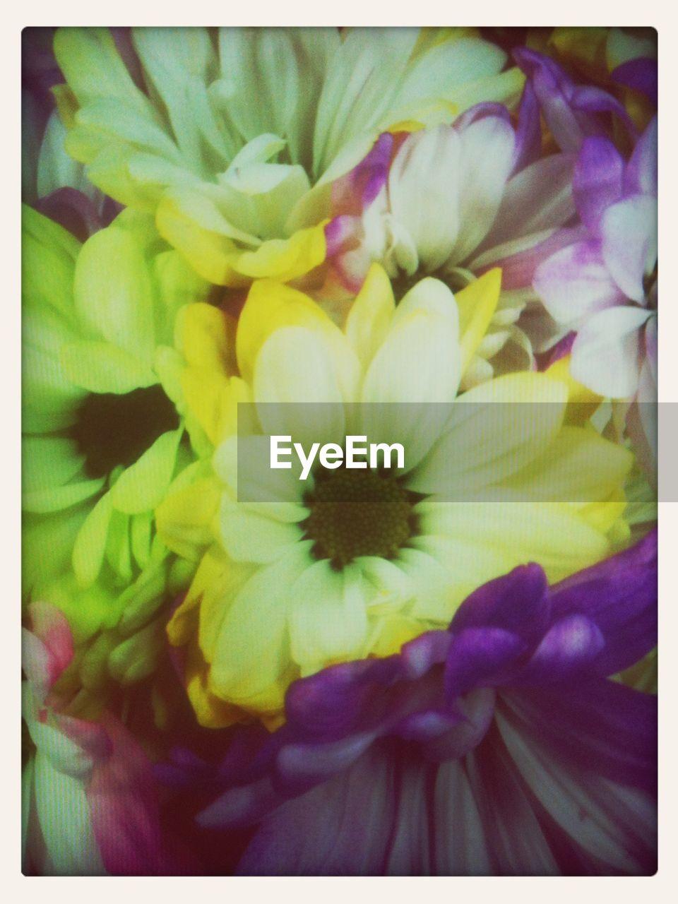 Detail shot of flowers