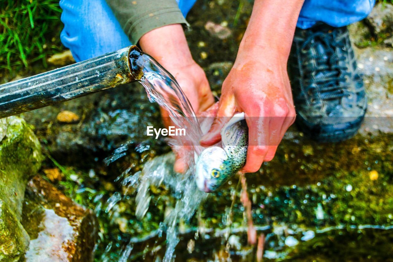 Washing Fish Under Running Water