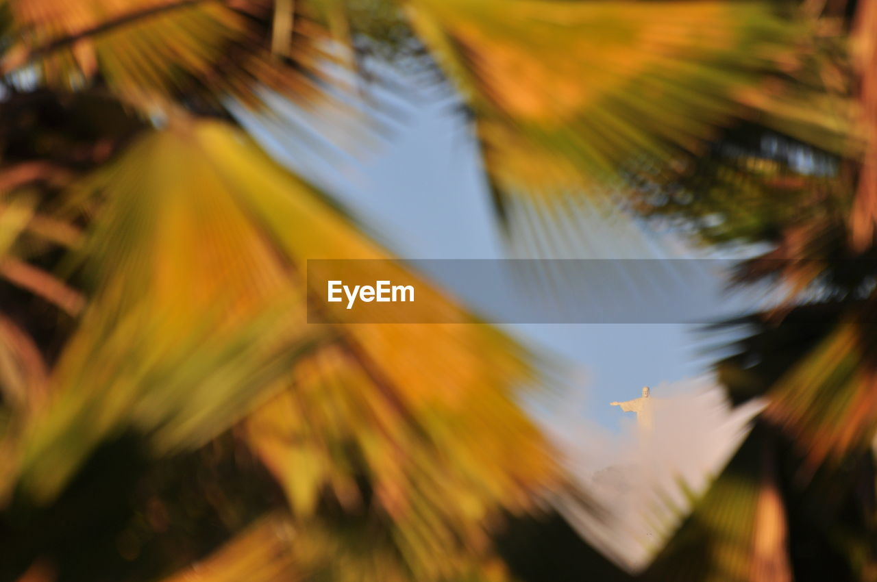 plant, tree, selective focus, no people, beauty in nature, growth, sky, nature, palm tree, close-up, leaf, low angle view, tropical climate, focus on foreground, orange color, outdoors, palm leaf, tranquility, plant part, yellow