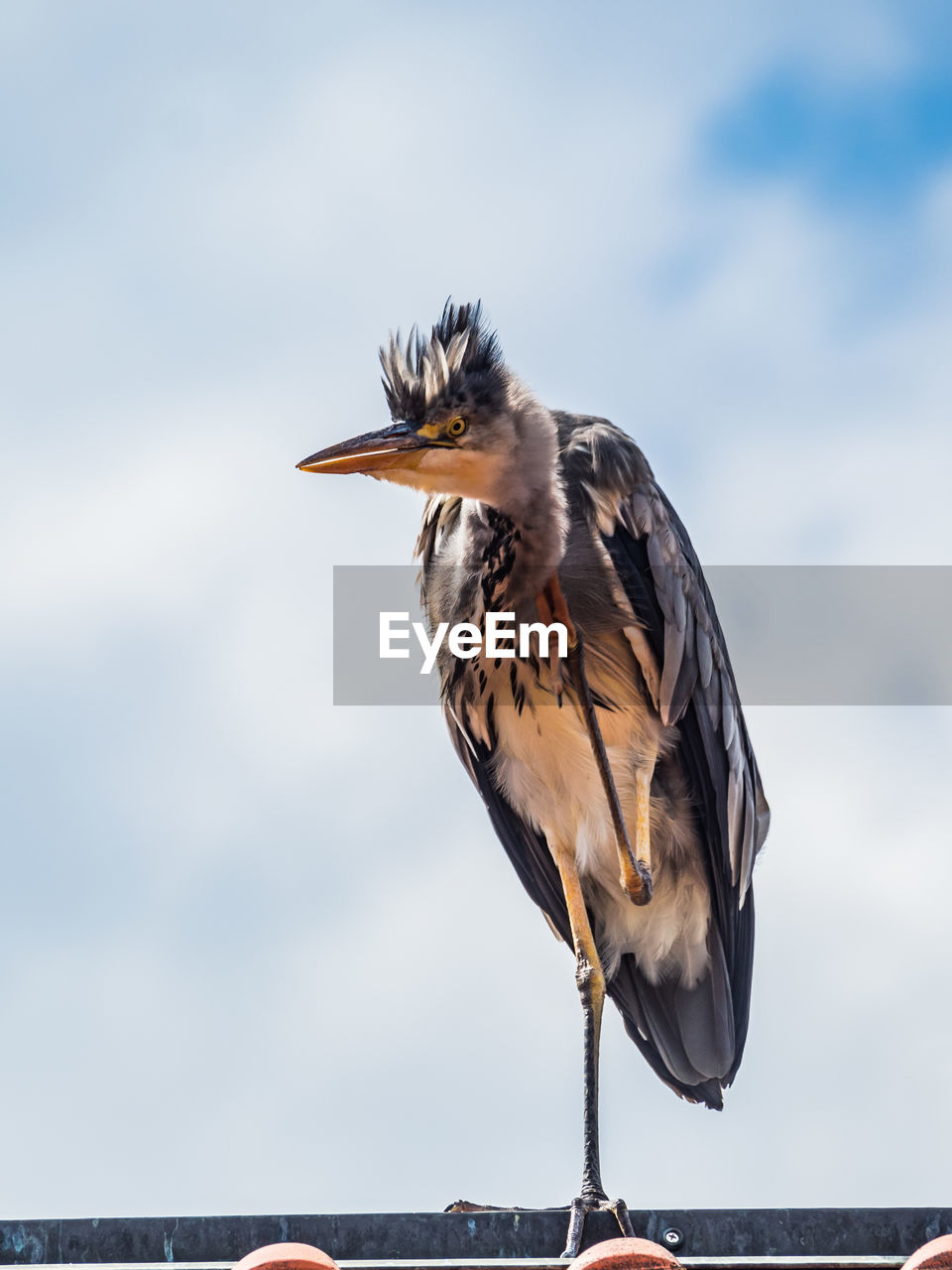 bird, one animal, animal themes, animal, vertebrate, animals in the wild, animal wildlife, focus on foreground, sky, perching, no people, nature, day, close-up, heron, beauty in nature, beak, outdoors, full length, water