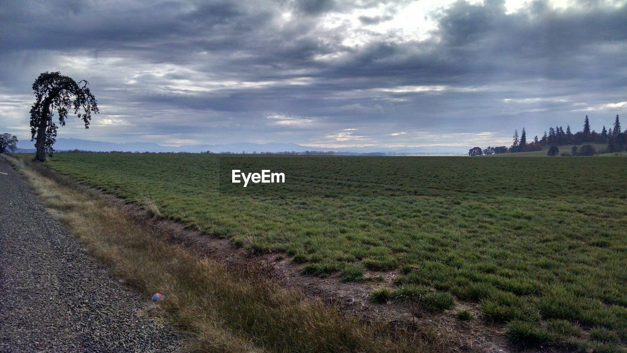 sky, grass, field, landscape, cloud - sky, outdoors, nature, day, tranquil scene, tranquility, scenics, beauty in nature, tree, no people