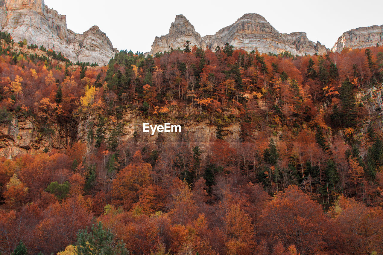 tree, rock, plant, beauty in nature, rock formation, tranquil scene, autumn, nature, rock - object, scenics - nature, no people, tranquility, change, day, solid, growth, mountain, sky, travel, travel destinations, formation, eroded