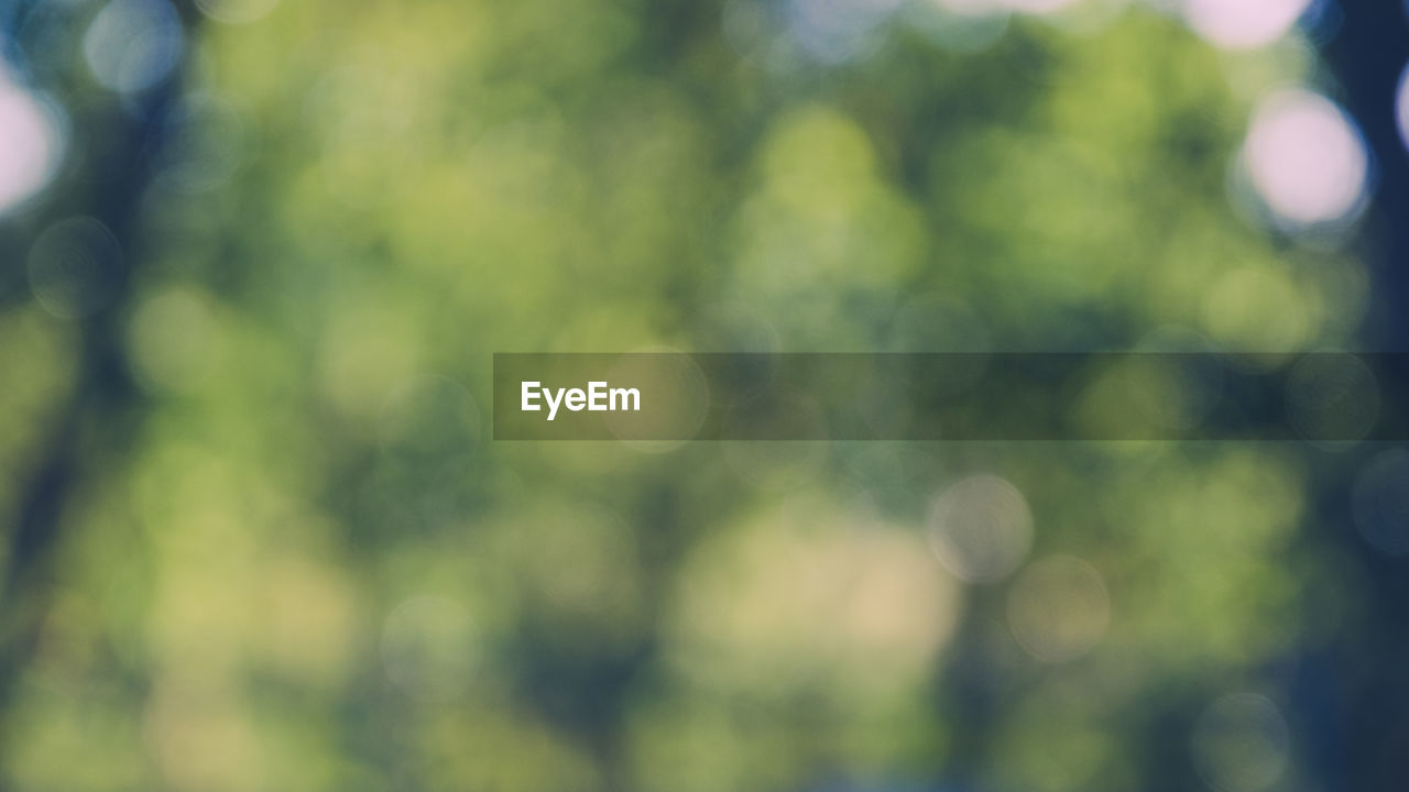 defocused, no people, focus on foreground, green color, day, close-up, nature, full frame, backgrounds, growth, outdoors, plant, beauty in nature, sunlight, pattern, tranquility, lens flare, tree, selective focus, freshness, soft focus