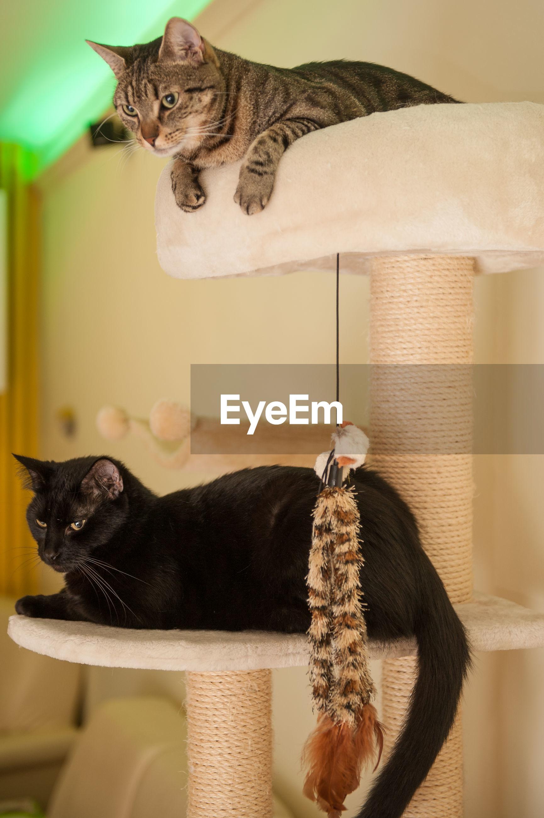PORTRAIT OF CAT SITTING WITH KITTEN
