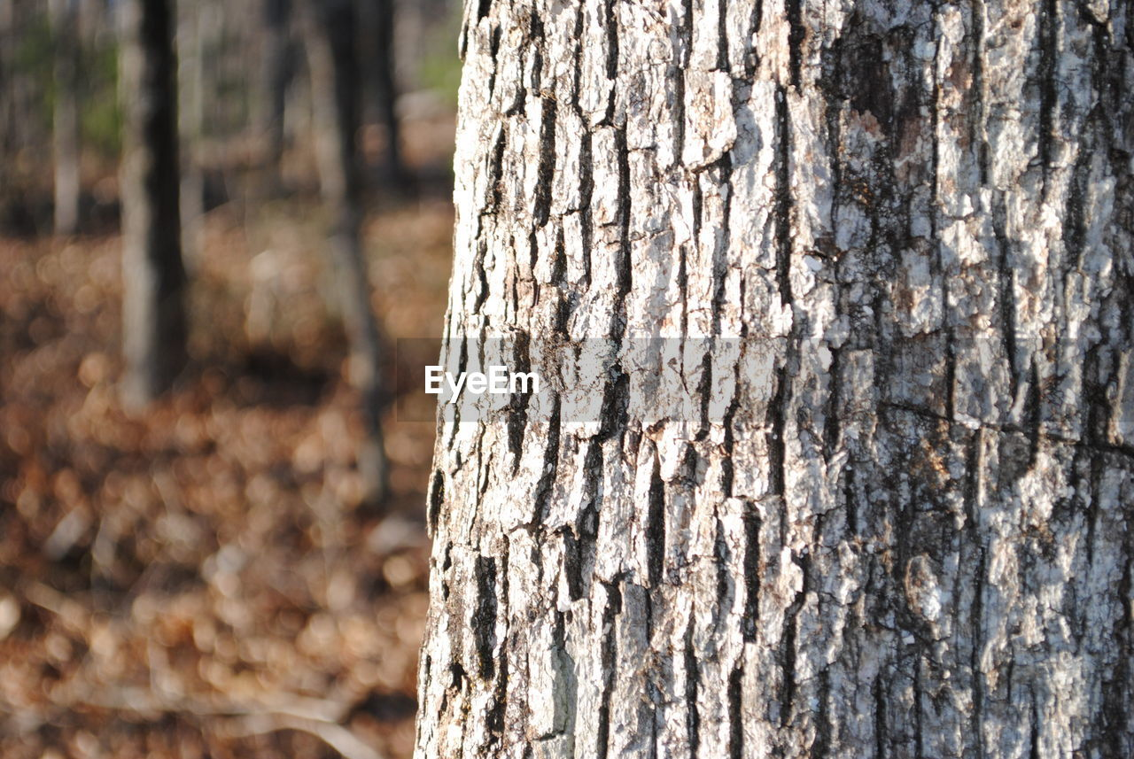 tree trunk, tree, textured, wood - material, nature, day, close-up, outdoors, no people