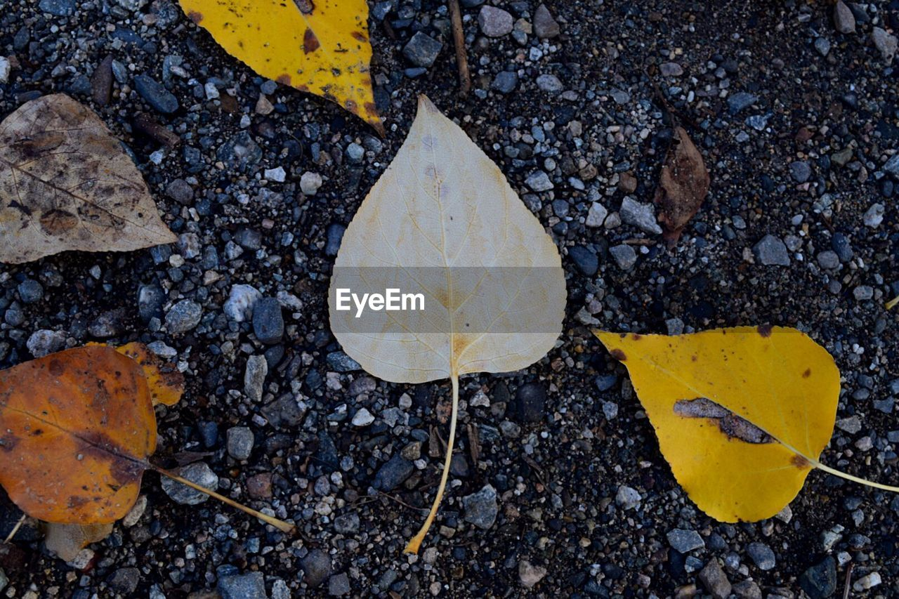 leaf, plant part, yellow, high angle view, nature, autumn, day, no people, change, close-up, outdoors, road, falling, vulnerability, dry, solid, fragility, leaves, beauty in nature, plant, natural condition, maple leaf