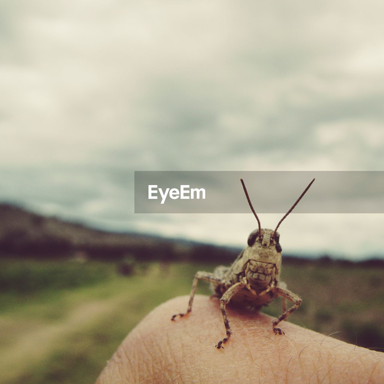 Cropped Image Of Finger Holding Grasshopper Against Sky