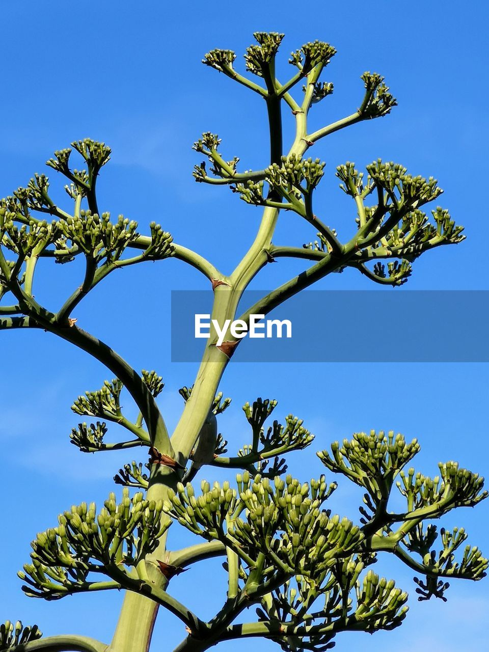 plant, tree, sky, low angle view, growth, nature, no people, blue, day, branch, beauty in nature, clear sky, outdoors, sunlight, tranquility, green color, leaf, flower, tree trunk, plant part
