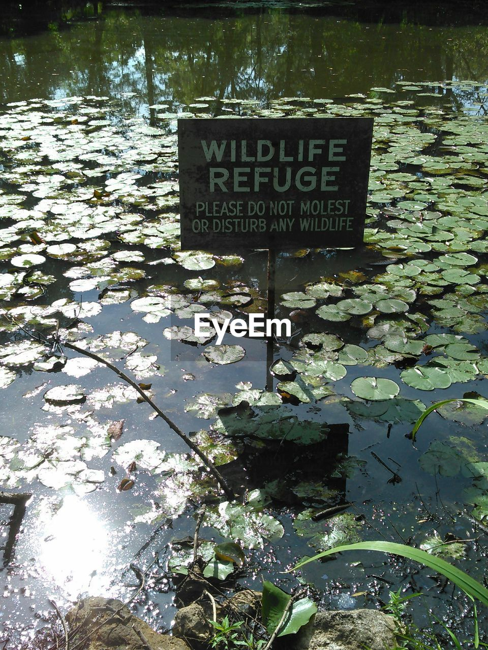High Angle View Of Signboard In Pond