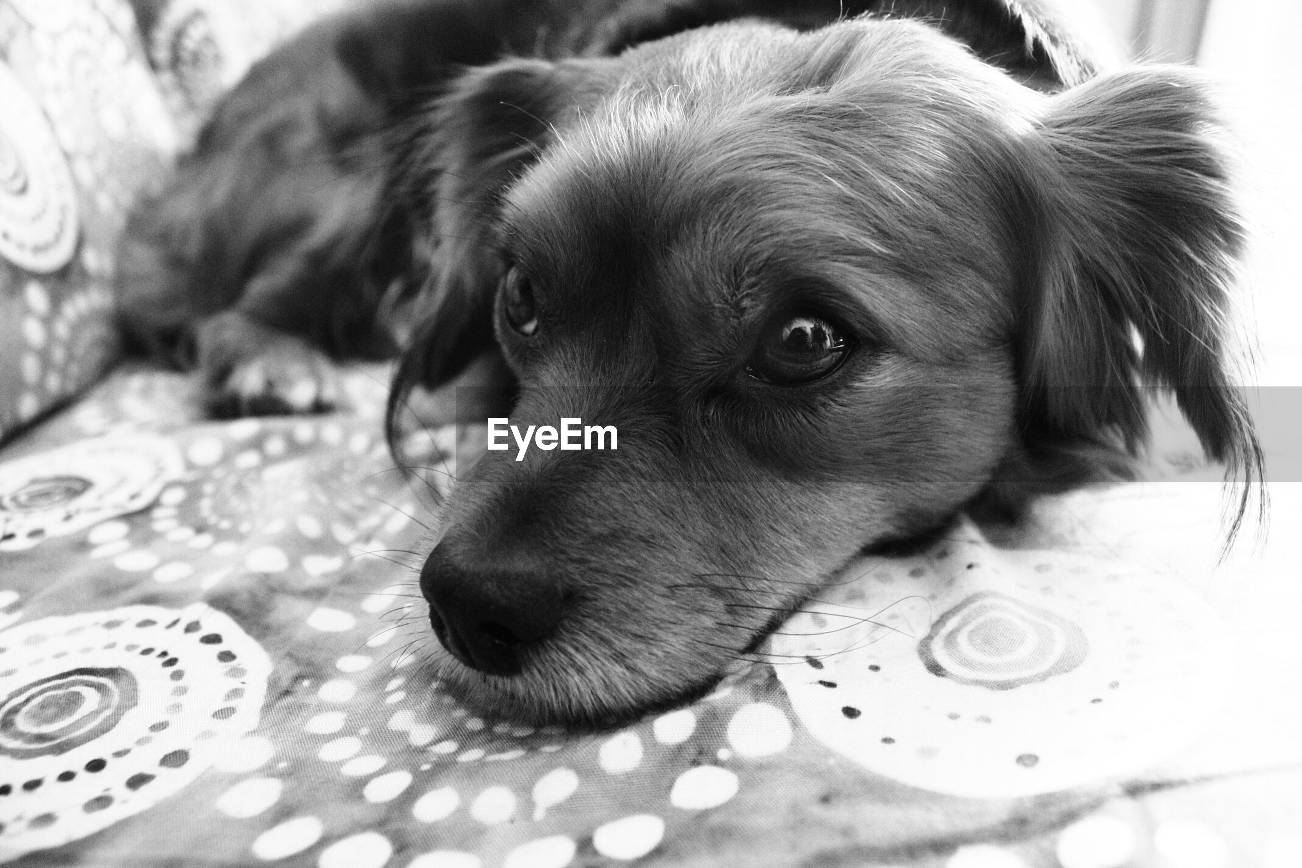 pets, domestic animals, dog, animal themes, one animal, mammal, indoors, close-up, animal head, relaxation, home interior, looking at camera, lying down, no people, portrait, animal body part, high angle view, selective focus, resting, water