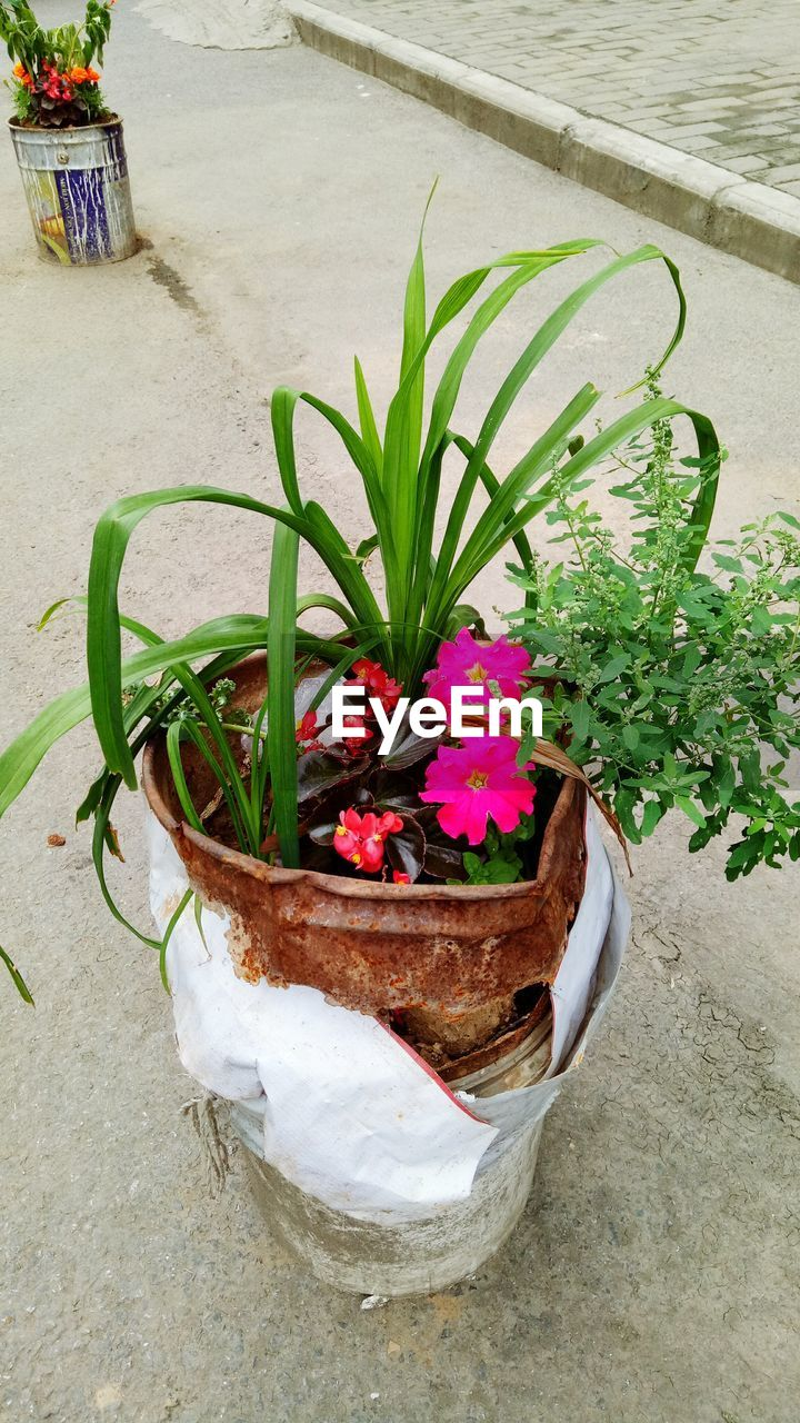 potted plant, flower, growth, high angle view, plant, outdoors, nature, no people, day, freshness, beauty in nature, close-up