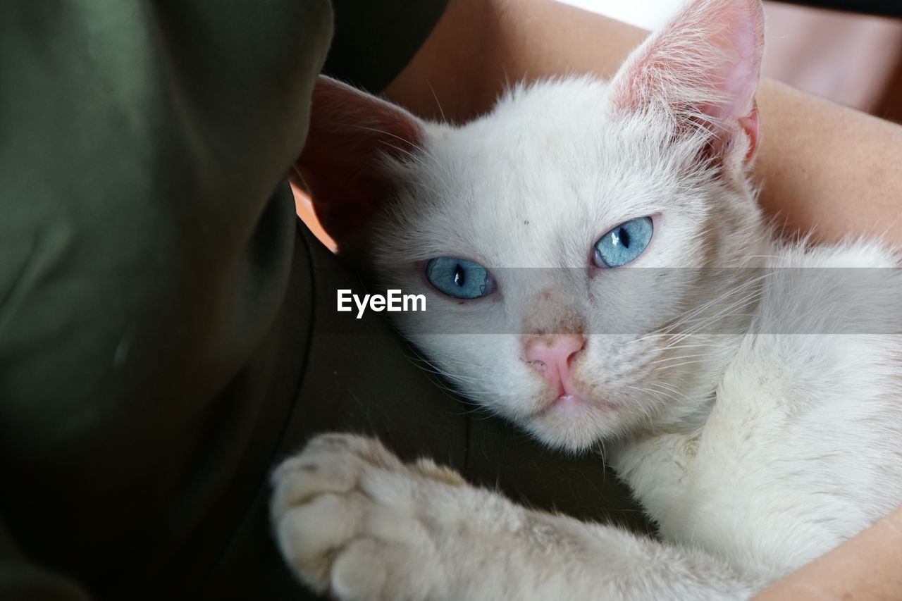 domestic animals, mammal, pets, domestic, cat, domestic cat, feline, one animal, vertebrate, looking at camera, portrait, indoors, close-up, people, white color, whisker, real people, pet owner