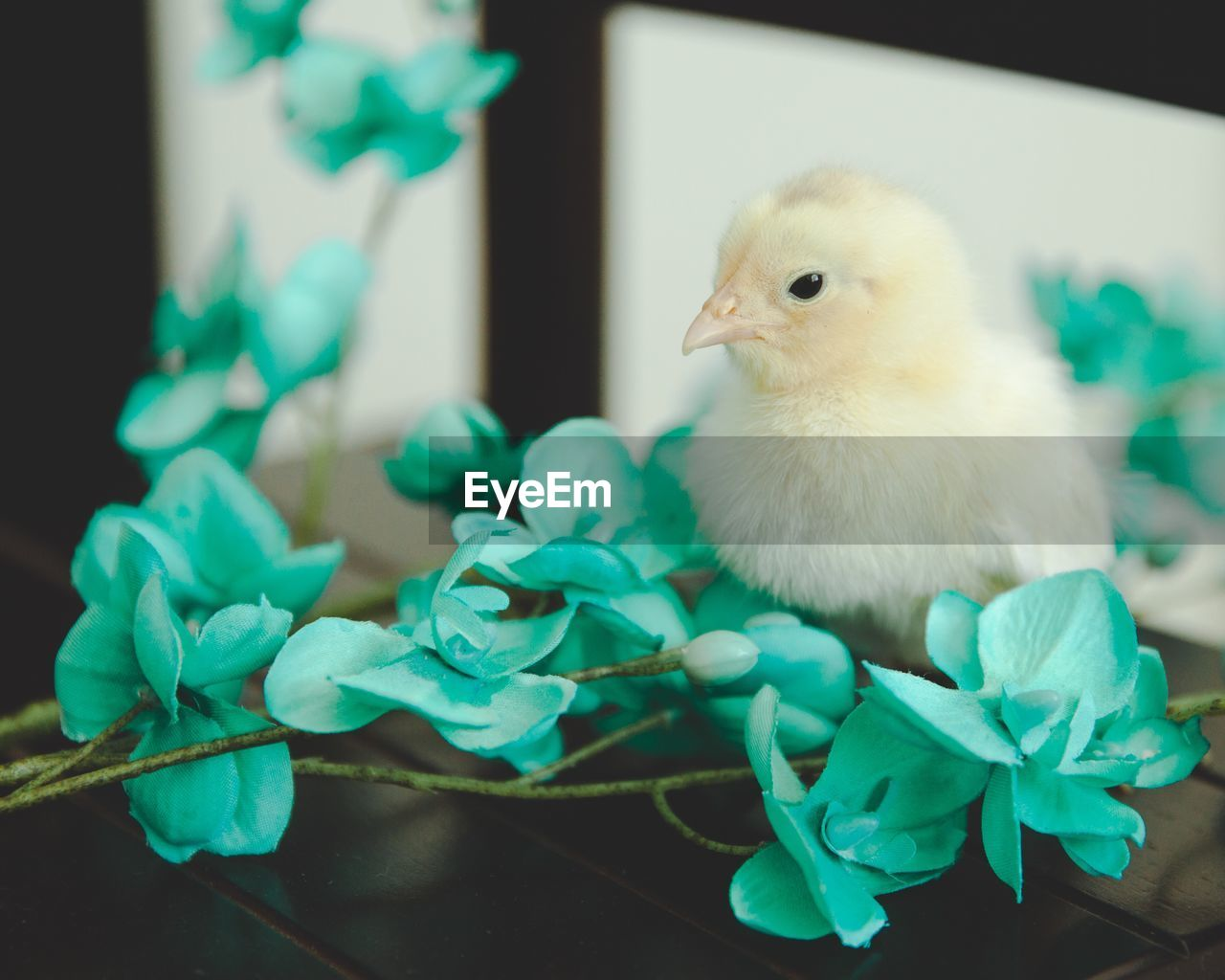 bird, animal, animal themes, vertebrate, young bird, young animal, domestic animals, close-up, baby chicken, livestock, plant, nature, no people, pets, one animal, domestic, green color, focus on foreground, chicken - bird, indoors