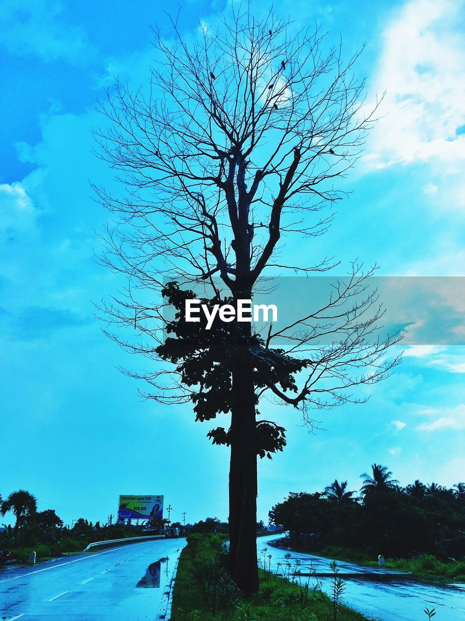 tree, sky, bare tree, car, outdoors, blue, branch, nature, no people, day