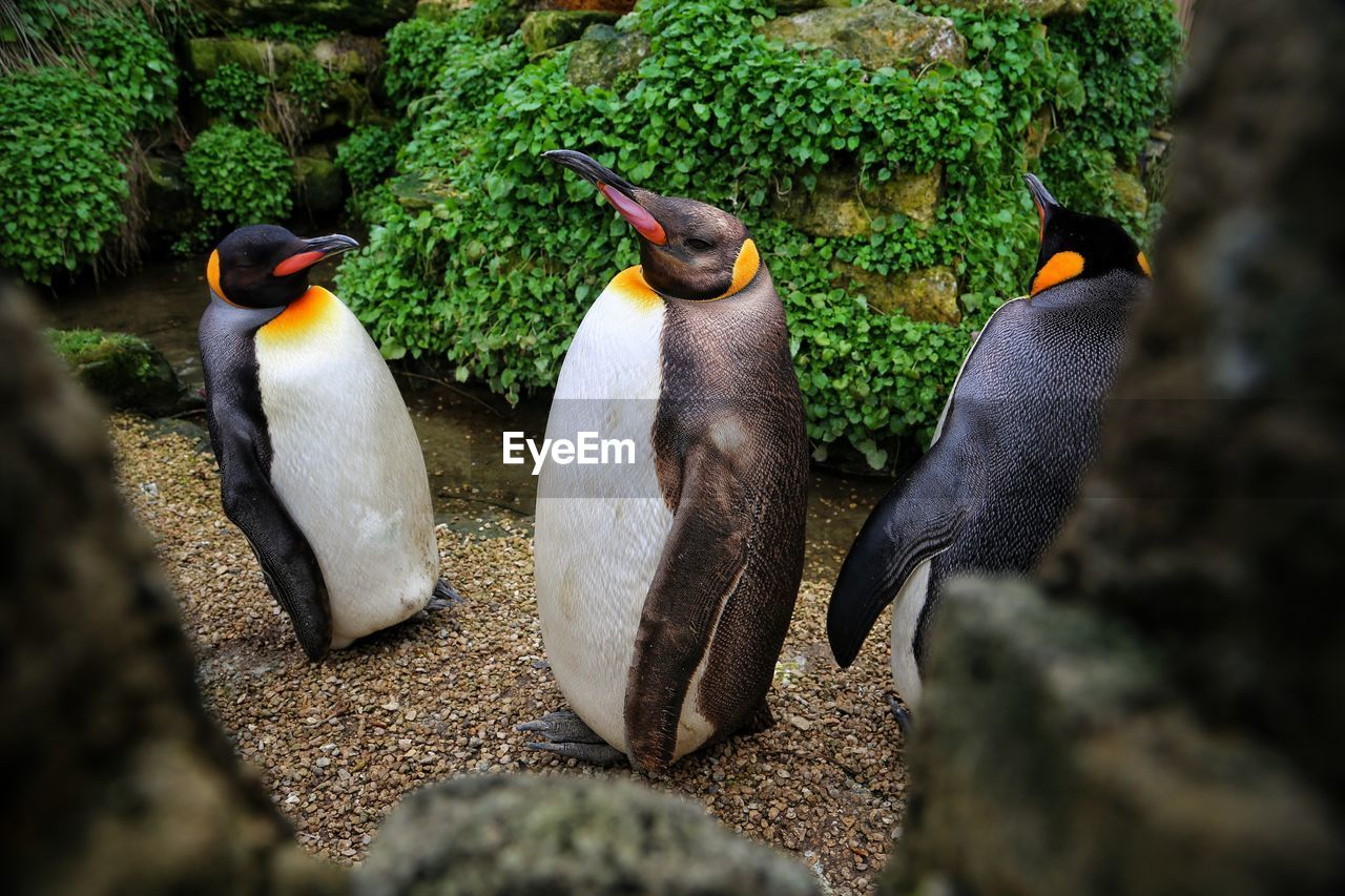 group of animals, animal themes, animal wildlife, animals in the wild, animal, bird, vertebrate, rock, penguin, rock - object, solid, nature, no people, day, two animals, togetherness, selective focus, beauty in nature, outdoors, care