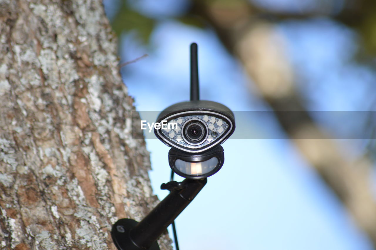 LOW ANGLE VIEW OF ELECTRIC LIGHT ON TREE