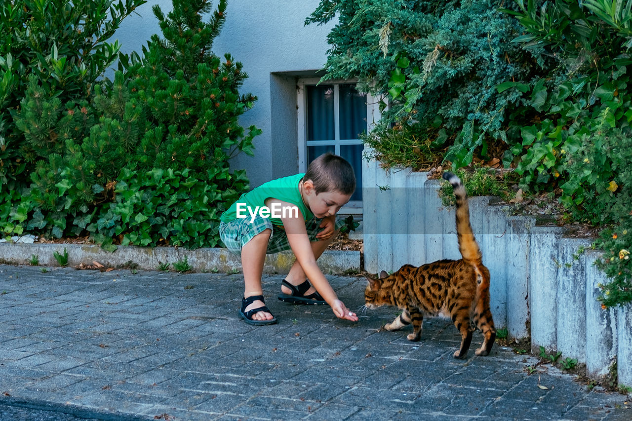 pets, one animal, animal themes, domestic animals, dog, outdoors, full length, mammal, domestic cat, one person, childhood, front or back yard, day, boys, built structure, building exterior, one boy only, children only, child, friendship, architecture, tree, people