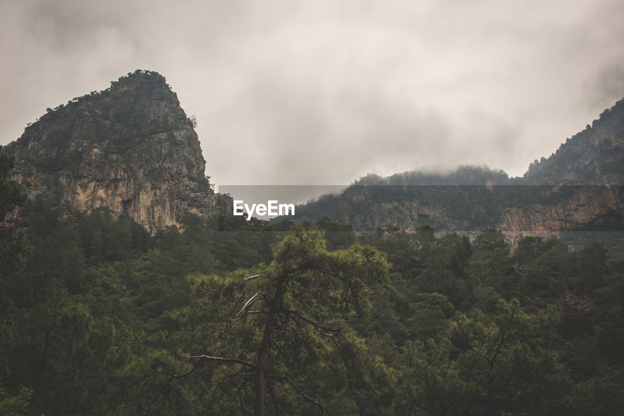 mountain, sky, beauty in nature, cloud - sky, tranquility, plant, tranquil scene, scenics - nature, tree, environment, nature, no people, day, rock, non-urban scene, landscape, mountain range, land, growth, rock - object, outdoors, formation, mountain peak